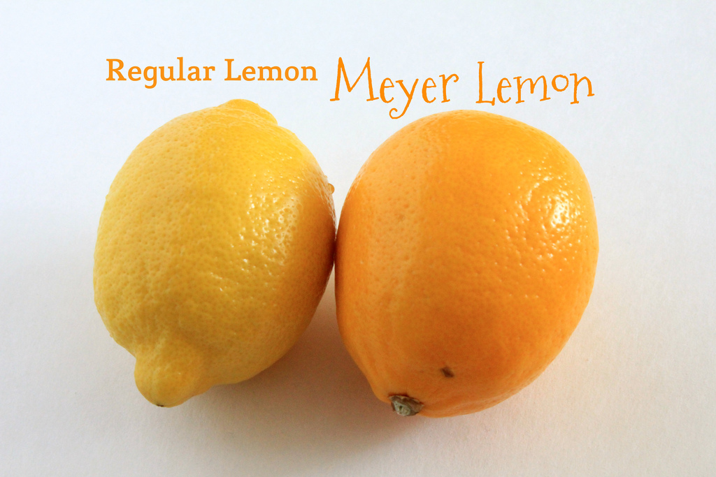 Meyer Lemons Vs Regular Lemons Know Their Differences 1mhealthtips Com