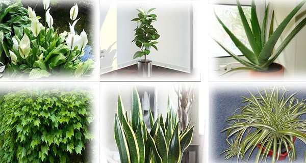 plants-you-should-keep-at-home