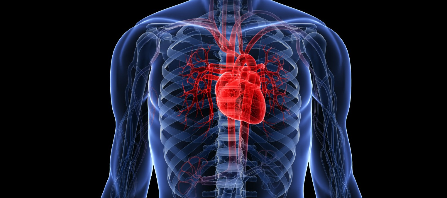 human-heart-facts