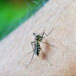 DIY-mosquito-trap