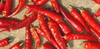 chilli pepper compound can stop breast cancer