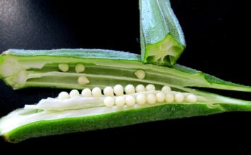 okra water benefits