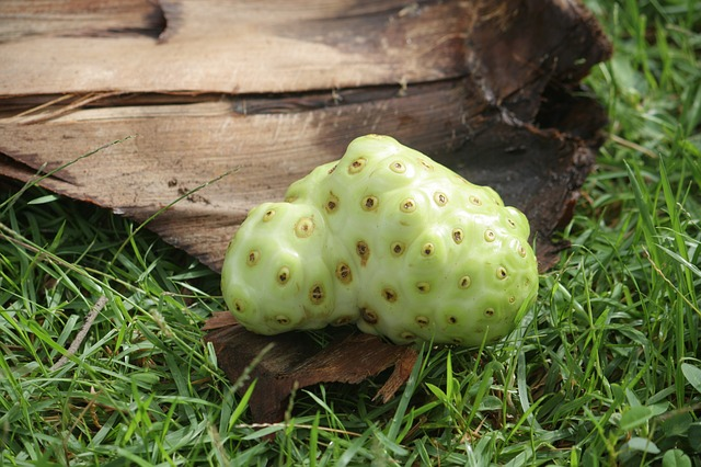 Noni juice is the juice extracted from the noni fruit. Noni fruit comes from a tree in subtropical and tropical regions.
