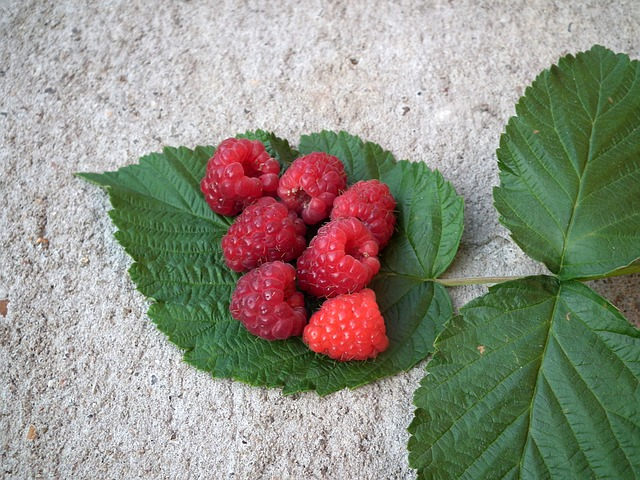 health benefits of red raspberry leaves