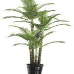 bamboo-palm