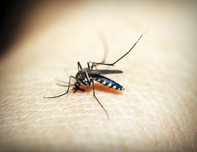 natural remedies for bug bites