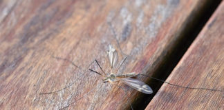 DIY mosquito repellents