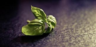 basil leaves benefits