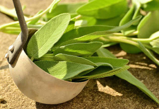 sage health benefits