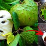 guyabano leaves tea benefits