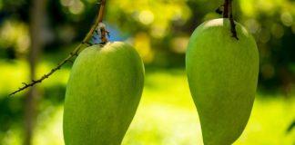 green mango health benefits
