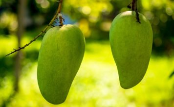 green mango health benefits
