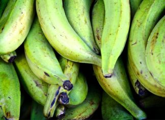 Curative Powers of Cooked Green Bananas