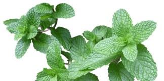 beauty uses of mint