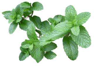 beauty uses of mint
