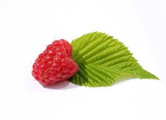 raspberry leaf tea benefits