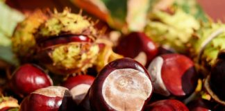 health benefits of chestnut