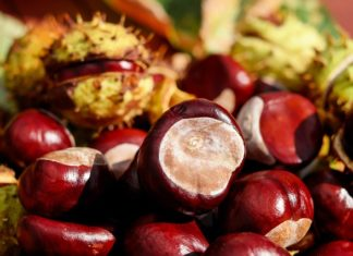 health benefits of chestnut