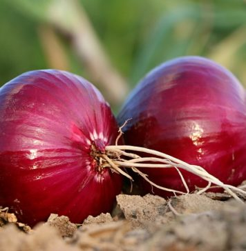 red onion benefits