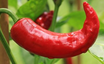 chili peppers may help you live longer