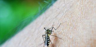dengue prevention tips