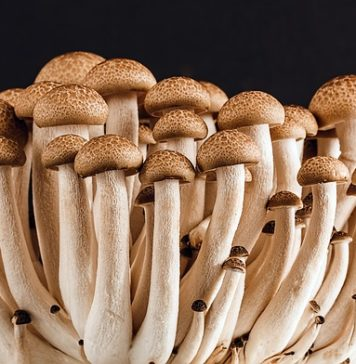 beauty benefits of mushroom
